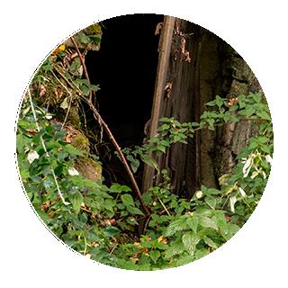 servicios Tratamientos herbicidas